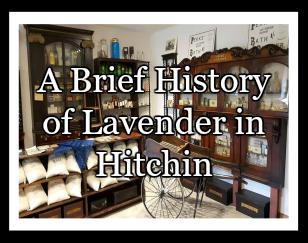 History of Lav