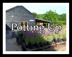 PottingUp