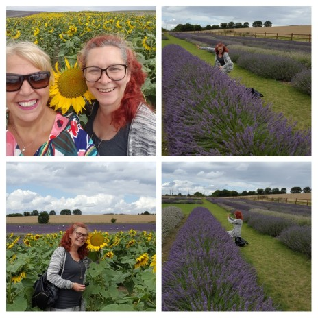 """Annie Jaques """"Sunshine and sunflowers and the smell of lavender wafting through the air....a perfect day"""" - 1st August 2017"""