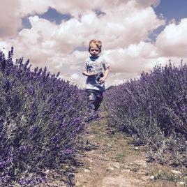 "Carole van der Watt ""Running through the fields"" - 31st July 2017"