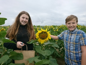 "Nicola Leigh ""Smiling Sunflower"" - 1st August 2017"