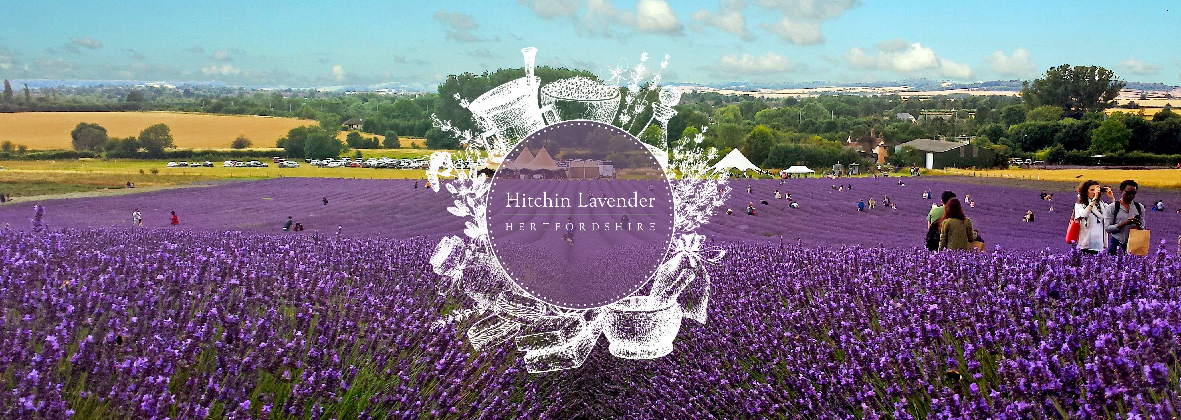 Hitchin Lavender Blog