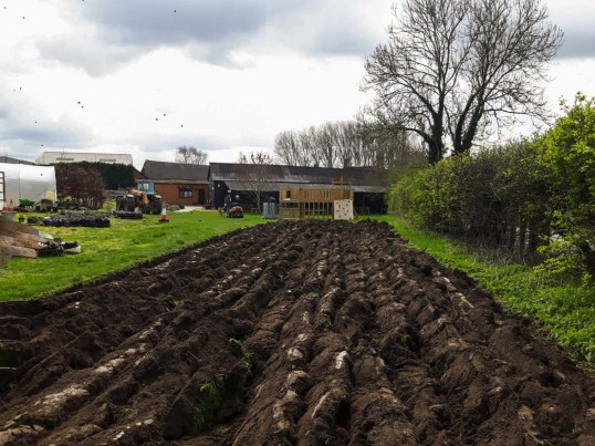 Ploughing the Flower Patch