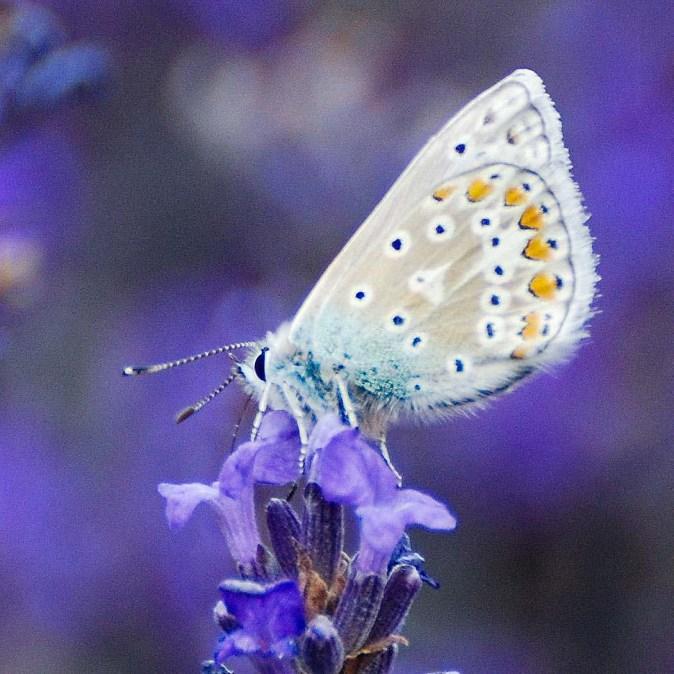 A Beautiful Butterfly