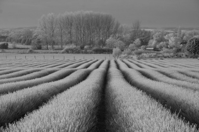Frosty Rows