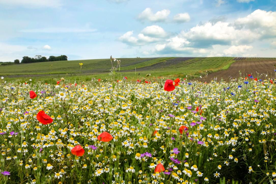 Wildflowers - 12-06-19