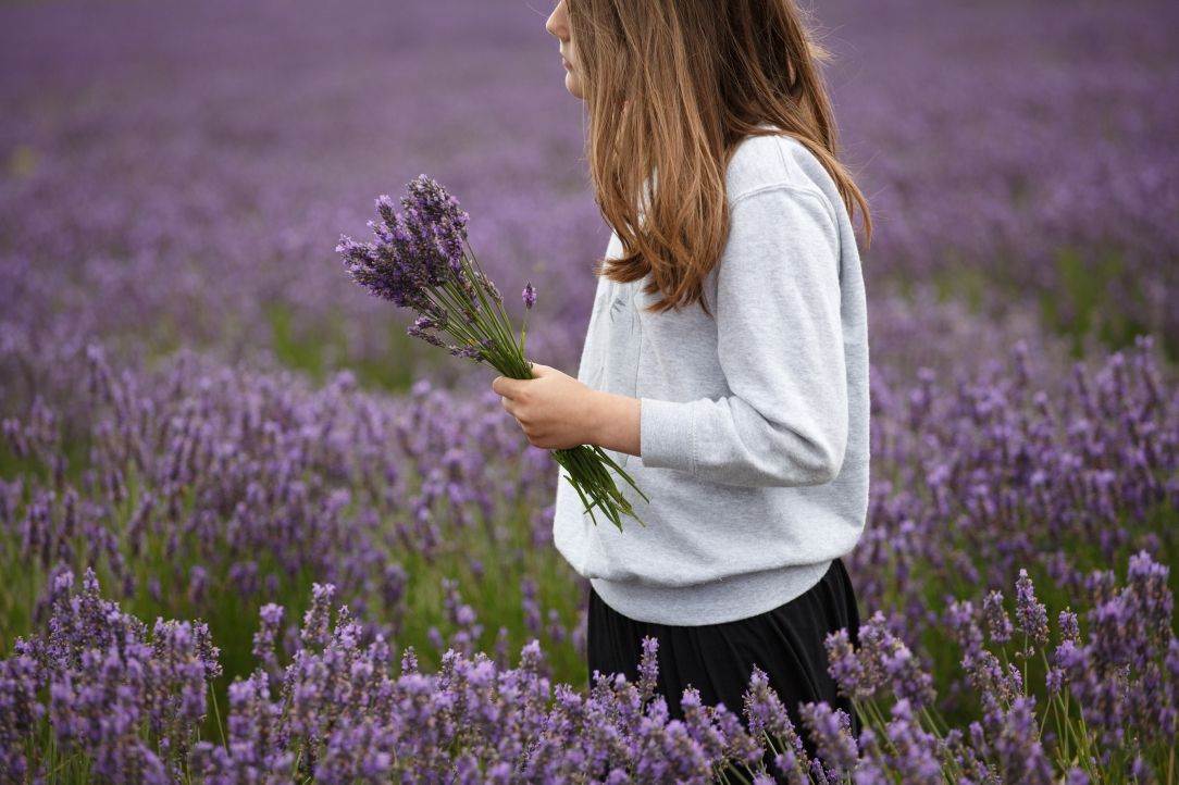 Hitchin-Lavender-girl-carrying-bunch-Sharon-Cooper