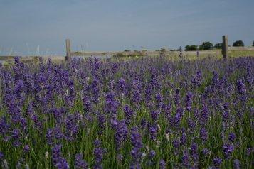 lavenderworkshop_2_-11