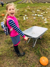 Poppy with wheelbarrow